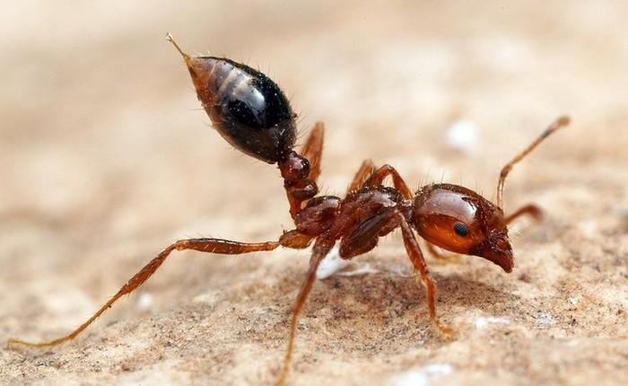 [Vietsub] Đây là những gì xảy ra khi một con kiến đốt bạn, chẳng trách lại đau đến vậy