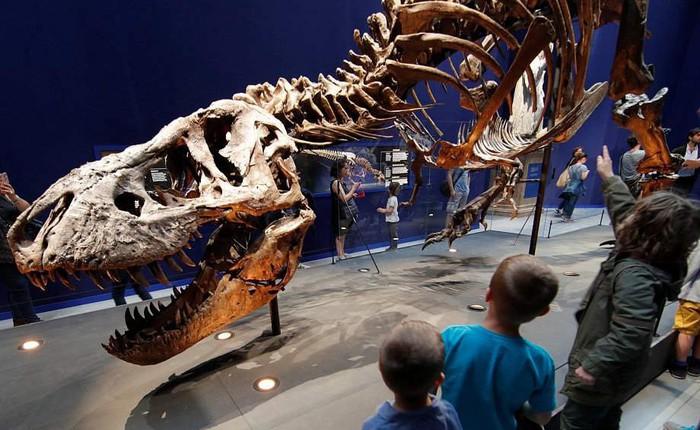 """Khủng long bạo chúa T-Rex đã tích hợp """"máy điều hòa không khí"""" trong hộp sọ"""