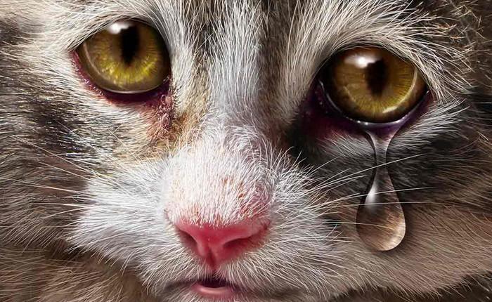 """Câu hỏi """"loài mèo có biết khóc không"""" đã có lời giải và bạn phải cẩn thận với điều đó"""