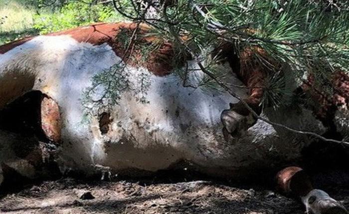 Bí ẩn hàng loạt xác bò tại Mỹ chết trong tình trạng máu bị rút sạch: Hung thủ là ma cà rồng, alien hay thế lực siêu nhiên nào?