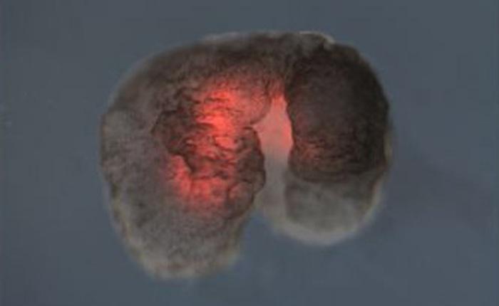 """Đột phá: Các nhà khoa học vừa tạo ra một """"dạng sống"""" hoàn toàn mới trên Trái Đất"""