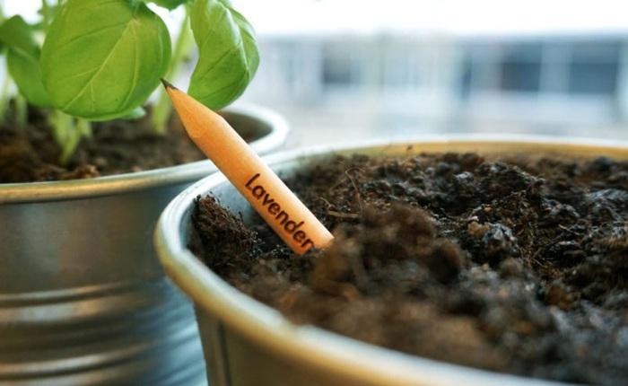 """Đây là chiếc bút chì """"ma thuật"""", cứ cắm vào đất rồi chăm chỉ tưới nước là sẽ mọc thành cây"""