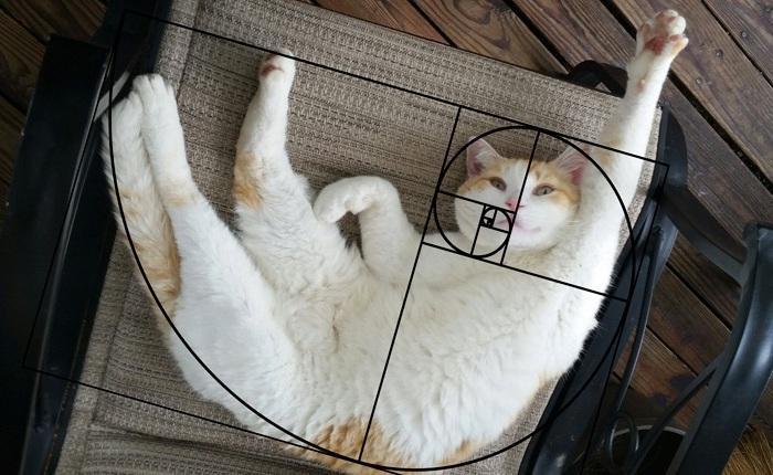 [Chùm ảnh vui] Tỉ lệ vàng Fibonacci đã chứng minh: Mèo là loài động vật hoàn hảo