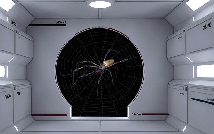 Cũng là mạng nhện, nhưng mạng nhện vũ trụ khác gì mạng nhện Trái Đất? - giáeurohômnay