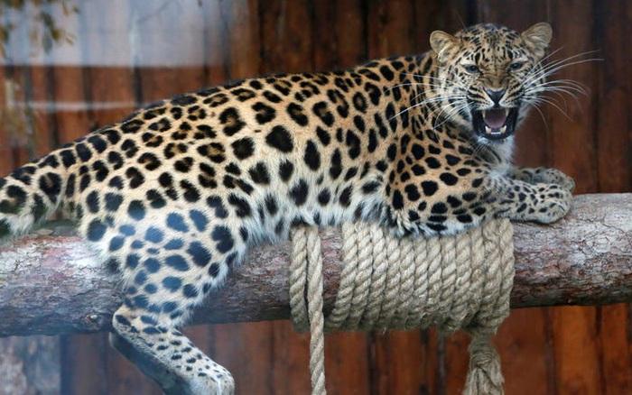 Vẻ đẹp của 24 loài động vật mới được đưa vào sách đỏ, có thể chúng ta sẽ không còn nhìn thấy chúng trong...