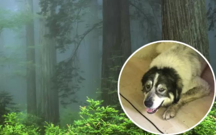 """Tìm mãi không ra chú chó đi lạc trong rừng, anh thanh niên bắc luôn dàn loa siêu khủng để gọi """"boss"""" quay..."""