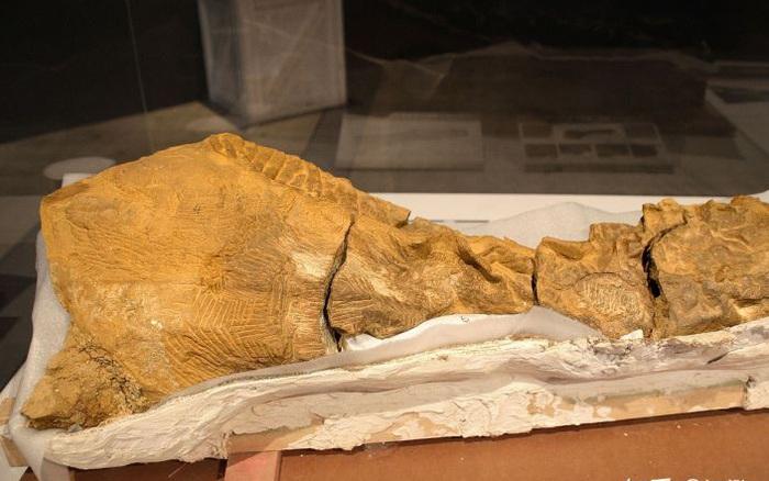 Phát hiện ra xác ướp khủng long có dấu chân hình móng ngựa tại Hoa Kỳ