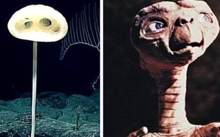 Phát hiện loài bọt biển ET trong