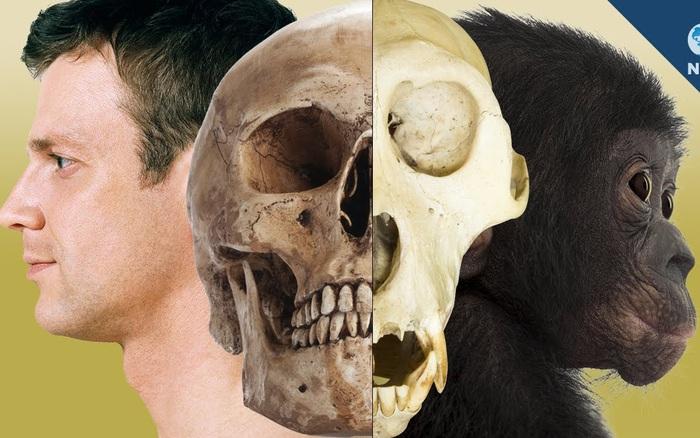 Con người có đang tiếp tục tiến hóa hay không?