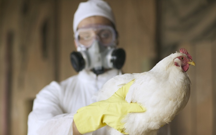 Nga cảnh báo WHO về 7 trường hợp nhiễm cúm gia cầm H5N8 đầu tiên trên người