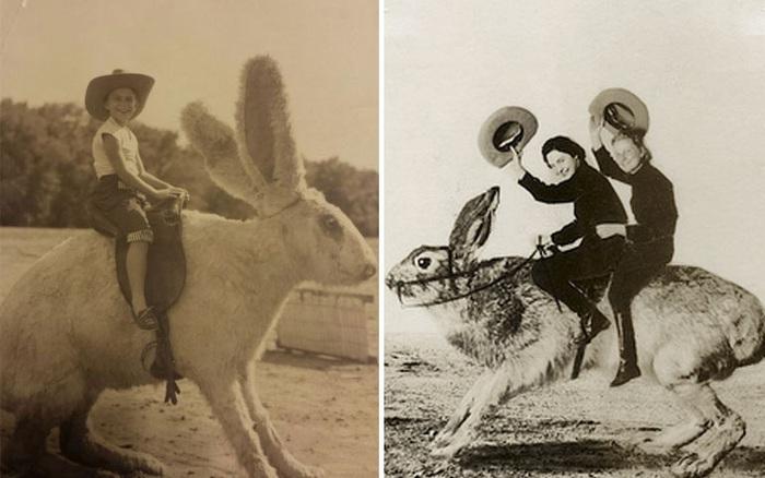 Nhà khoa học Nhật Bản mất 14 trang A4 để giải phương trình: Tại sao không có con thỏ nào to bằng một con ngựa?