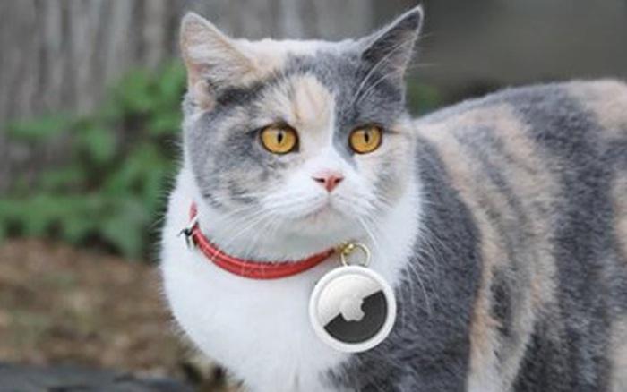 Apple: Đừng dùng AirTag để theo dõi thú cưng và trẻ nhỏ!