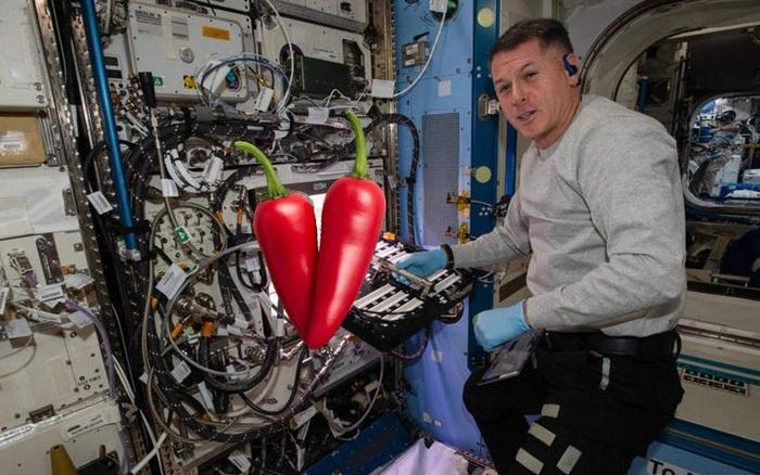 Tại sao ớt lại được chọn để trồng thử nghiệm trên trạm vũ trụ ISS?