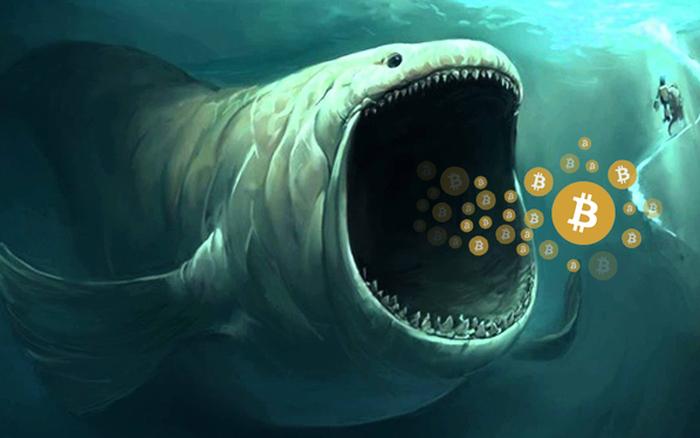 'Cá voi Bitcoin' thức giấc sau 3 năm, gom hàng ồ ạt - x��� s��� vietlott