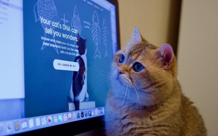 Thêm một điểm tương tự đáng kinh ngạc nữa giữa con người và mèo: bộ gen - gi�� v��ng h��m nay